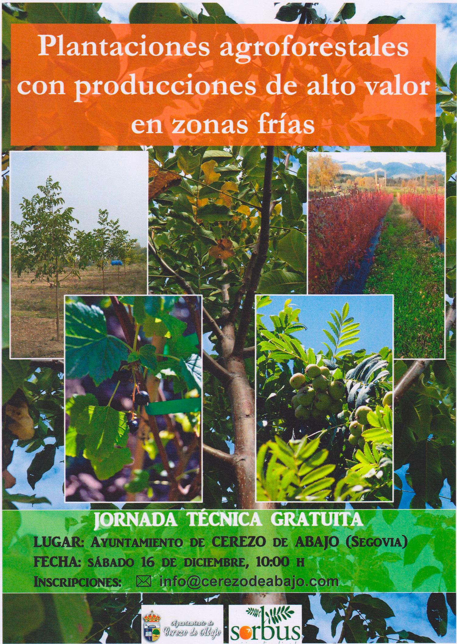 Plantaciones-Agroforestales-cerezo-de-abajo-1500